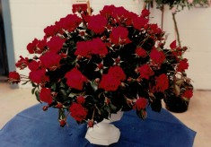 1994 Name the Rose Competition